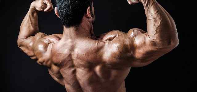 筋肉ムキムキ男性の背中