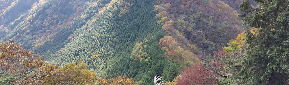 紅葉が始まりそうな山