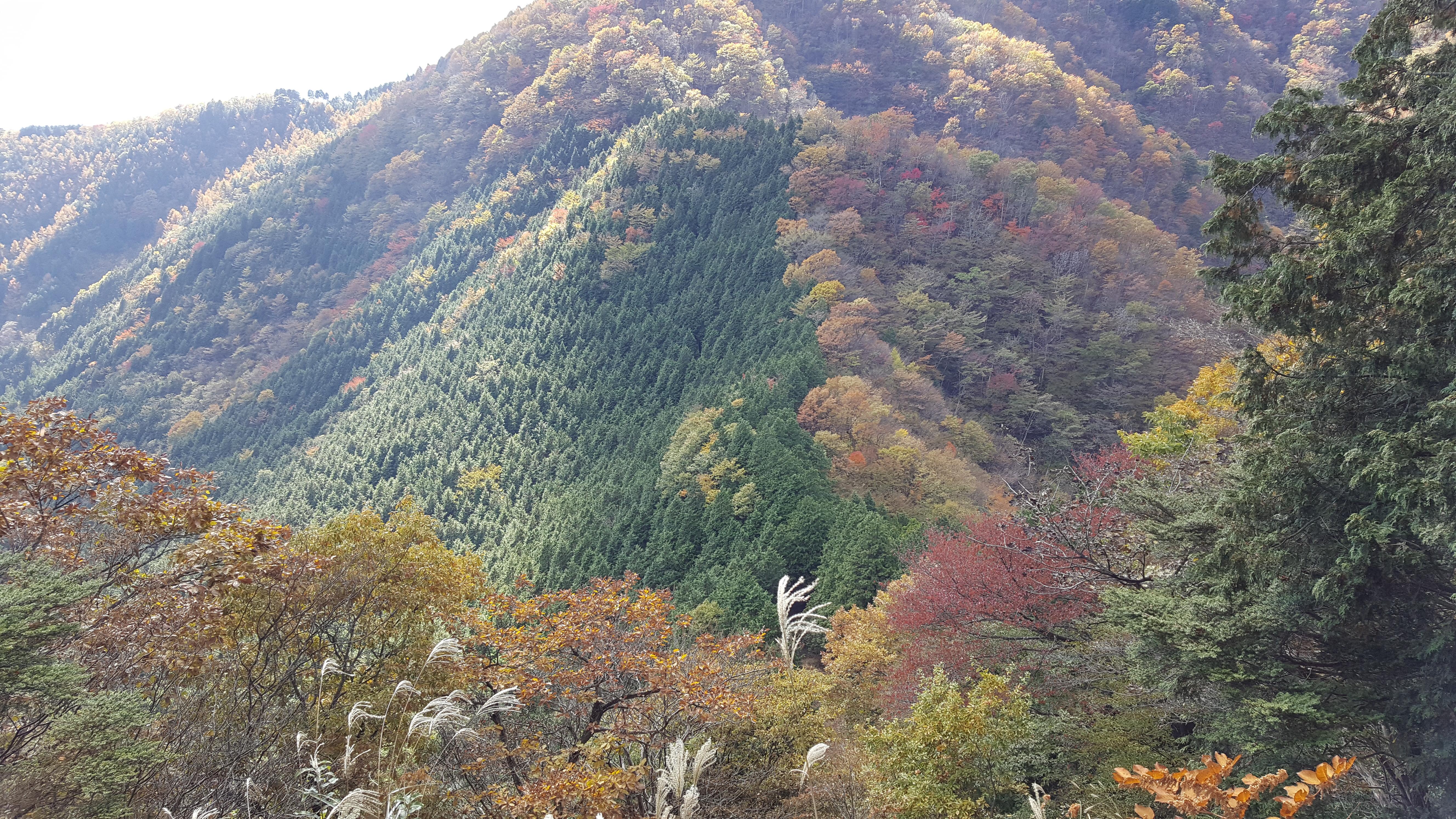 鳩ノ巣から川苔山(川乗山)へ
