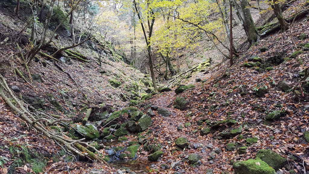 川苔山登山途中の神秘的な雰囲気
