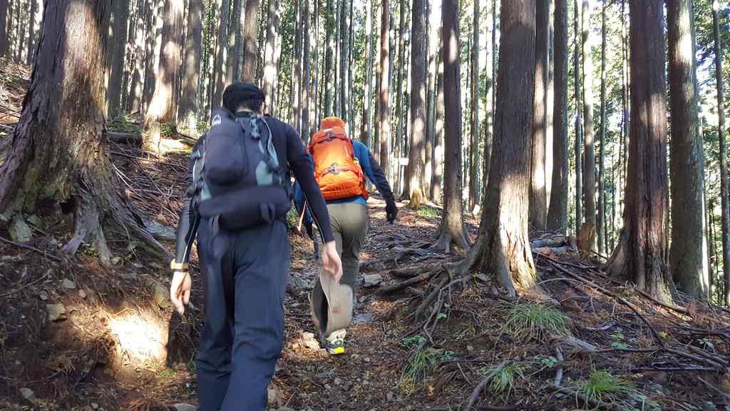 川苔山登山で道なき道を進みます