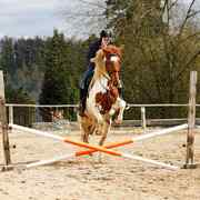 馬の障害物レース