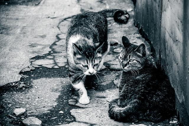 2匹の猫の白黒写真