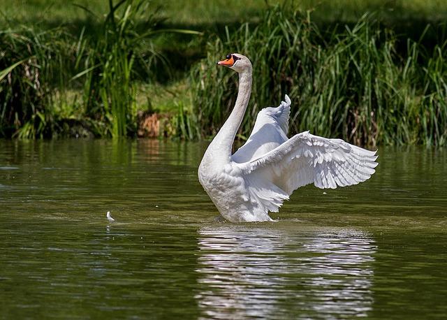 【退職挨拶のマナー】あとを濁さず立つ鳥になろう
